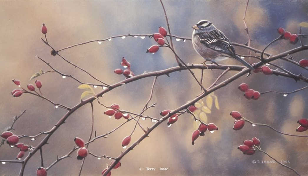 A Crown Among The Thorns Terry Isaac