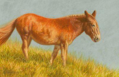A Mule in the Warm Sun - Rachelle Siegrist