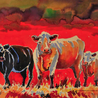 A Palette Of Cows Gregg Johnson