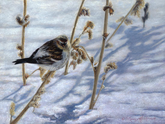 A Touch Of Frost Cindy Sorley Keichinger