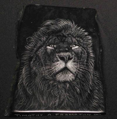 African Lion Tim Frampton (1)