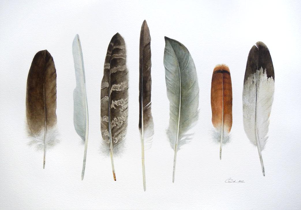 Alberta Birds Feather Collection - Charity Dakin