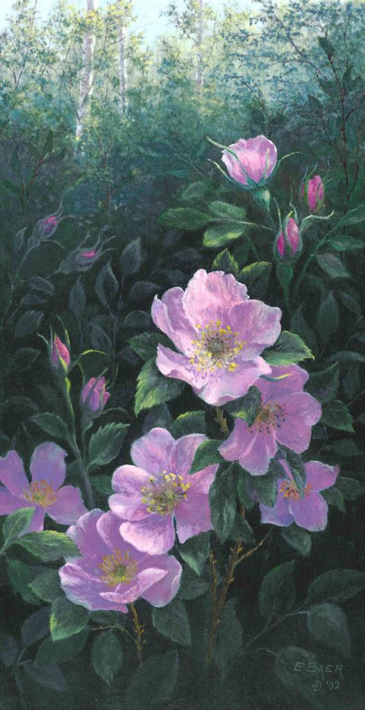 Alberta Wild Rose IV Elsie Baer