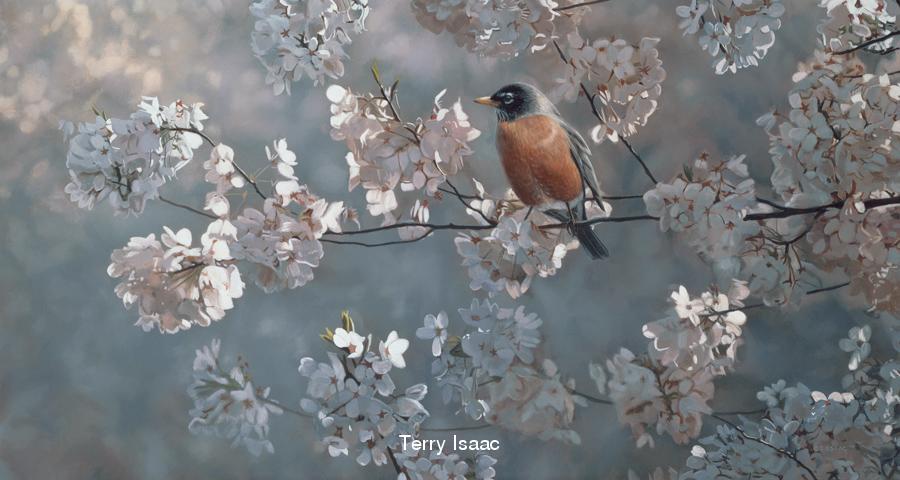 Ambassador Of Spring Terry Isaac