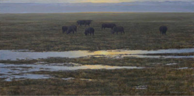 Angus Sunset Robert Bateman