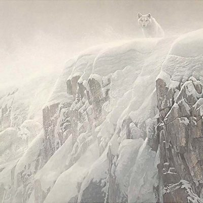Arctic Cliff - White Wolves - Robert Bateman