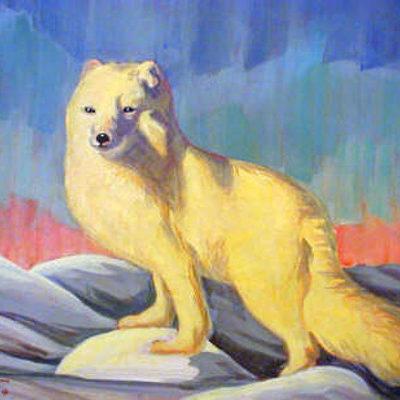 Arctic Fox Bern Will Brown