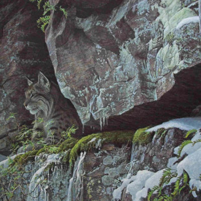 At the Cliff - Bobcat - Robert Bateman