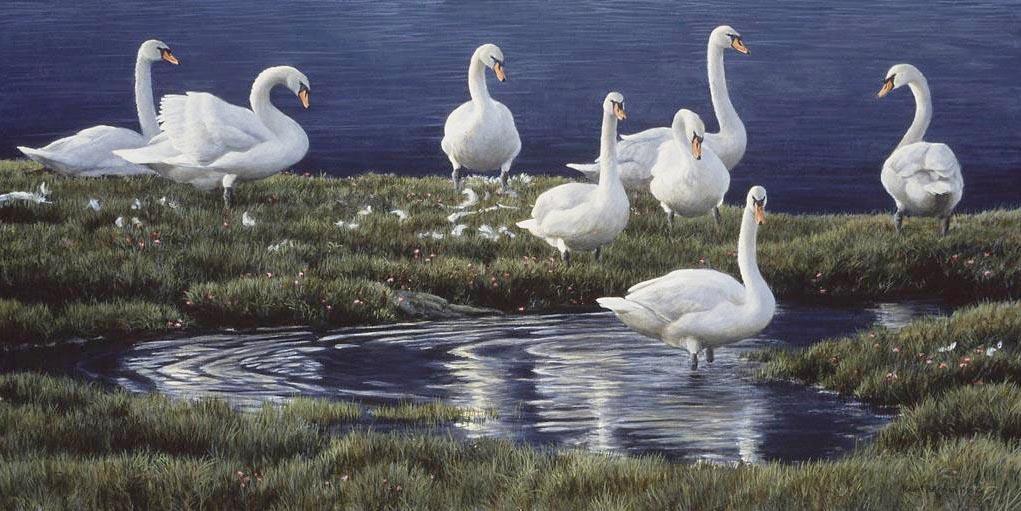 Bank of Swans - Robert Bateman