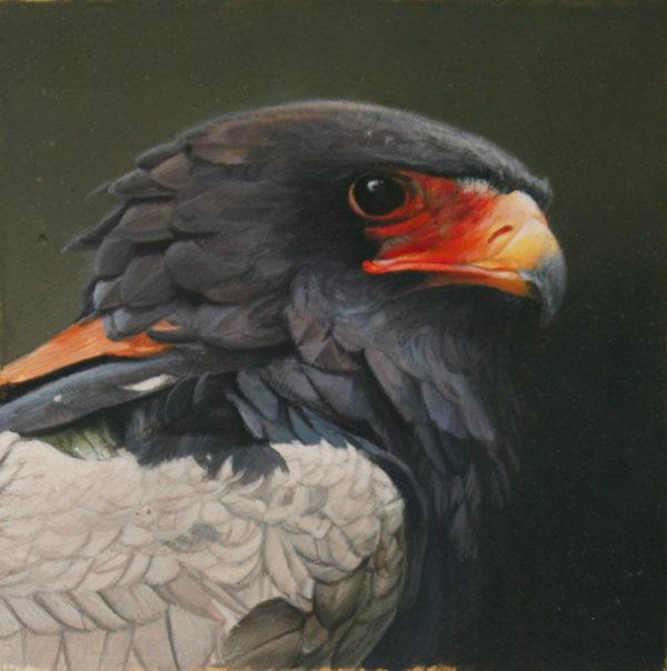 Bateleur Eagle John Mullane