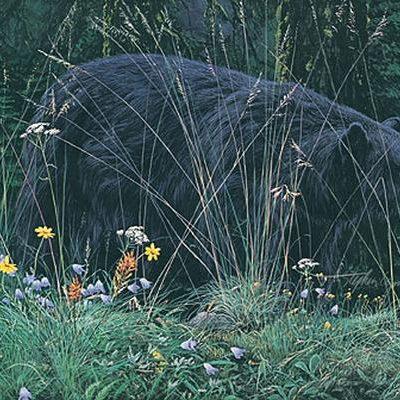 Bear & Blossoms Stephen Lyman