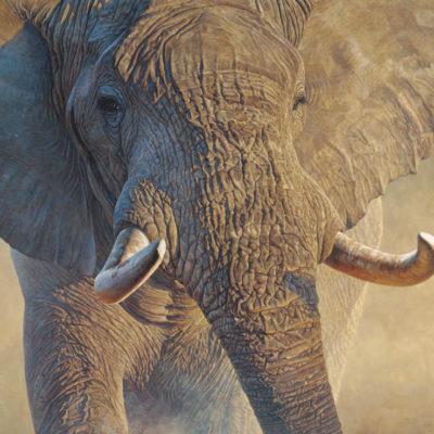 Big Ivory John Banovich