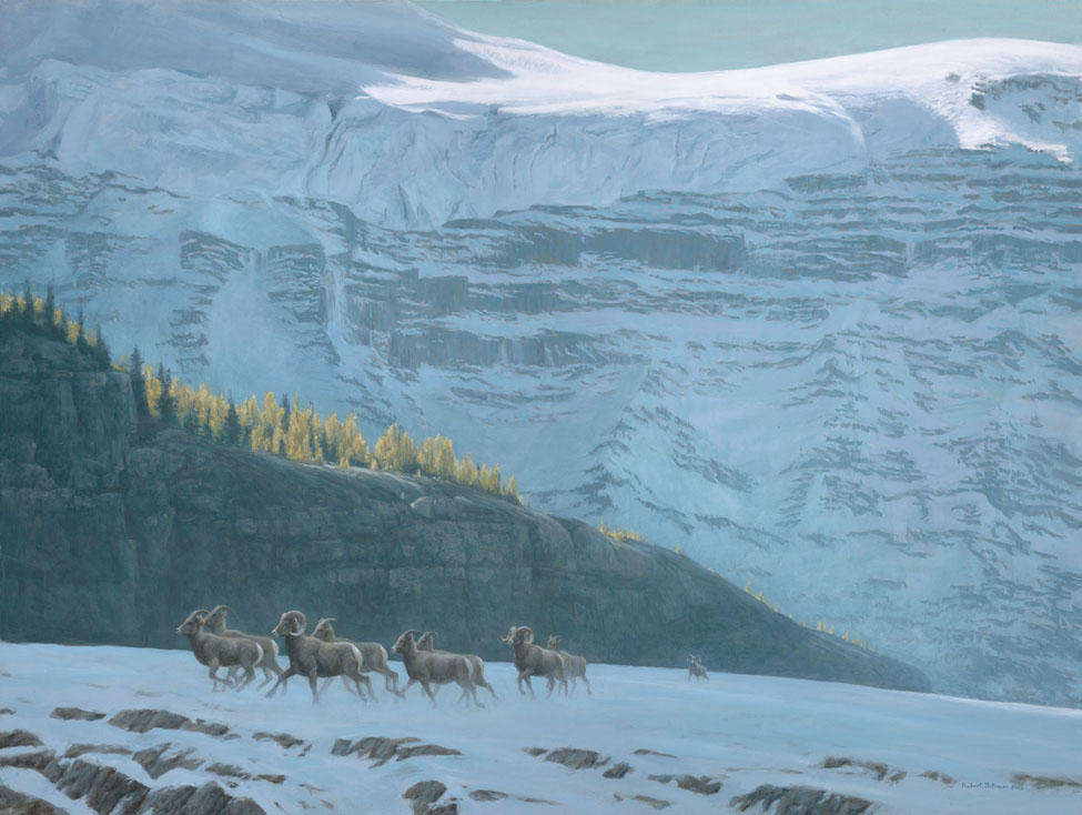 Bighorn Sheep Herd – Robert Bateman