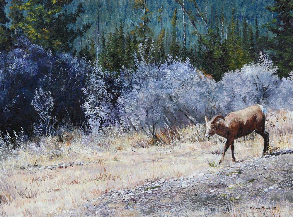 Bighorn Sheep Outside Jasper - Kerri Burnett