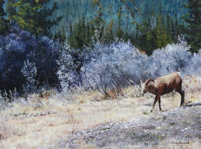 Bighorn Sheep Outside Jasper - Kerri Burnett