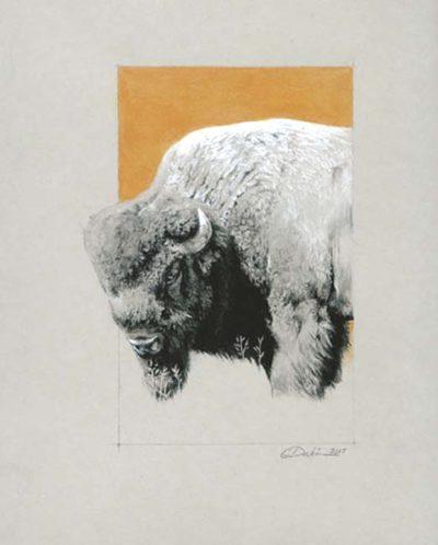 Bison - Charity Dakin