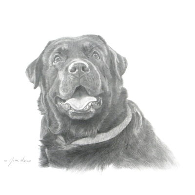Black Labrador John Weiss