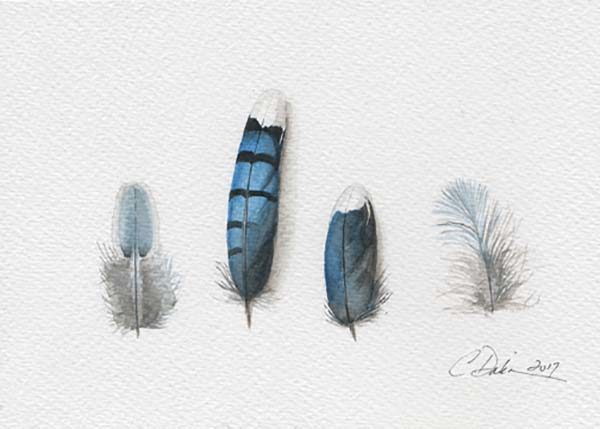 Blue Jay Feather Collection - Charity Dakin