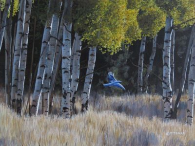 Bluebird in Aspens - Terry Isaac