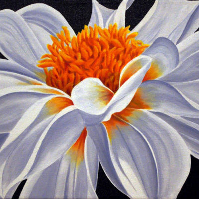 Bright White Dahlia Dennis Magnusson