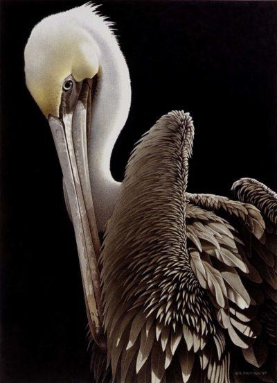 Brown Pelican - Barbara Banthien