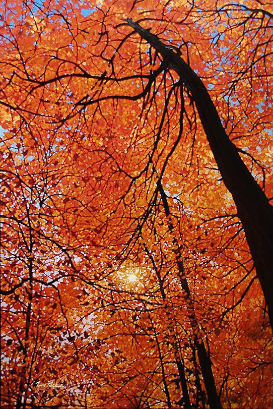 Canopy Of Gold Tim Packer