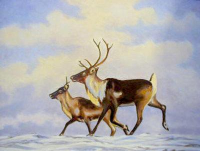 Caribou Bern Will Brown