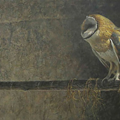 Catching the Light - Barn Owl - Robert Bateman