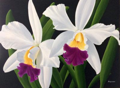 Cattleya Orchids Dennis Magnusson
