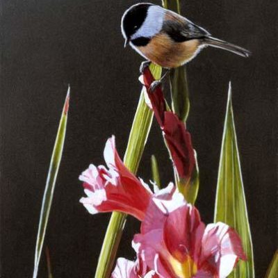 Chickadee And Pink Gladiolas Terry Isaac