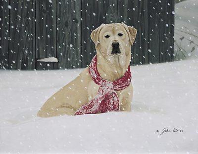 Cold Nose, Warm Heart John Weiss