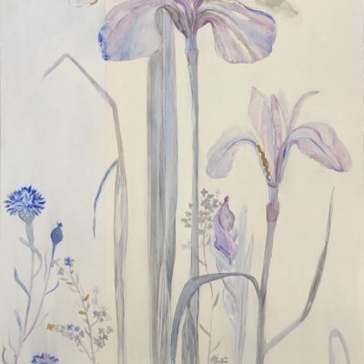 Cornflower Iris 1 - Fiona Hoop
