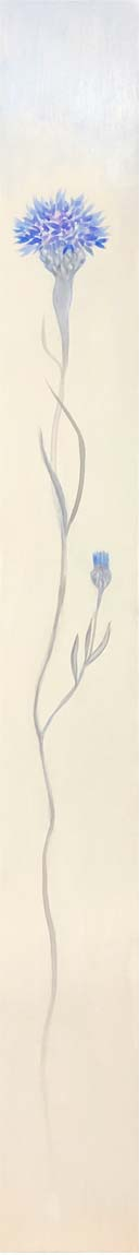 Cornflower Iris 2 - Fiona Hoop