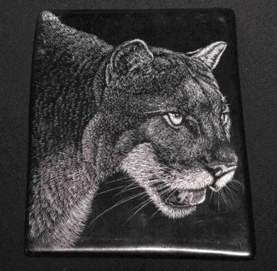 Cougar #2 Tim Frampton (1)