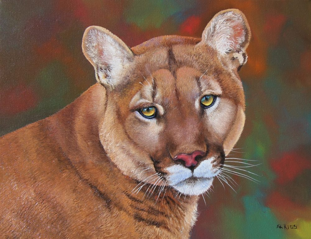 Cougar - Andrew Kiss