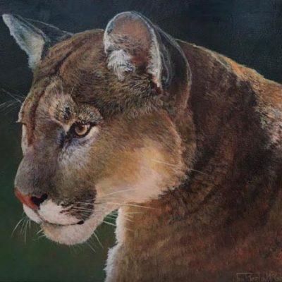 Cougar Portrait - Jan Martin McGuire