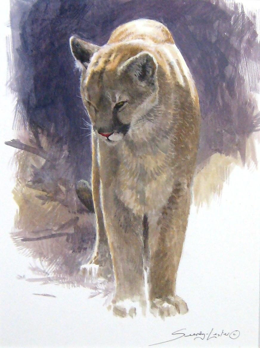 Cougar Study by John Seerey-Lester