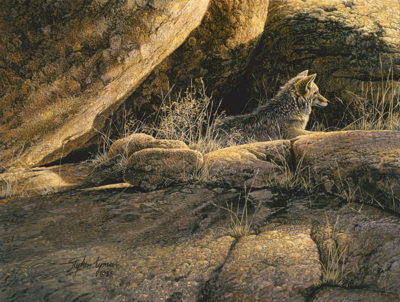 Coyote Afternoon Stephen Lyman