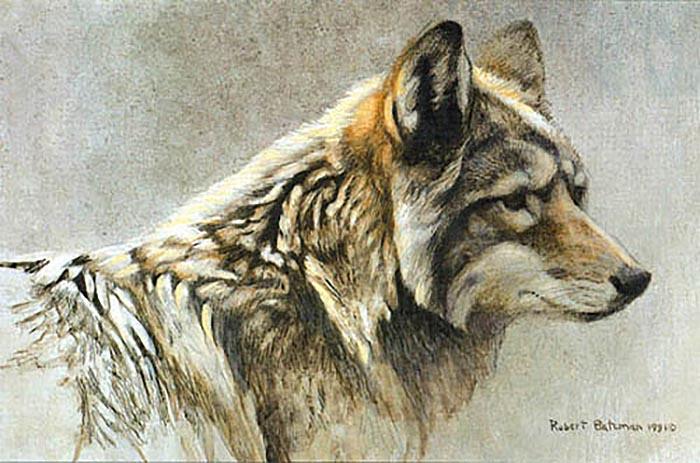 Coyote Head Study - Robert Bateman