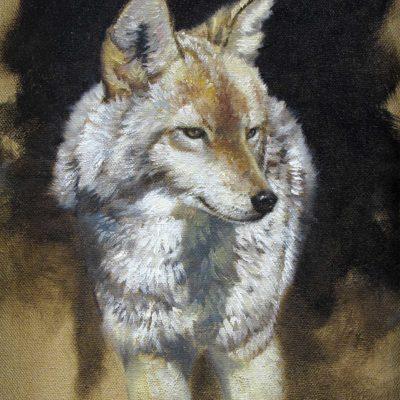Coyote Study - John Seerey-Lester
