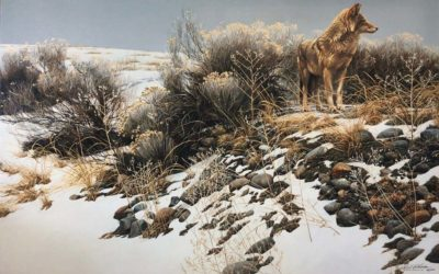 Coyote in Winter Sage - Robert Bateman
