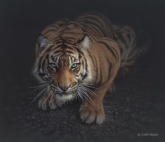 Crouching Tiger Collin Bogle