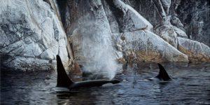 Deep Water Orcas - Ron Parker