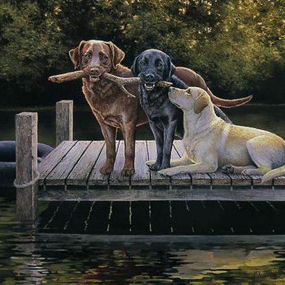 Dog Days Bonnie Marris