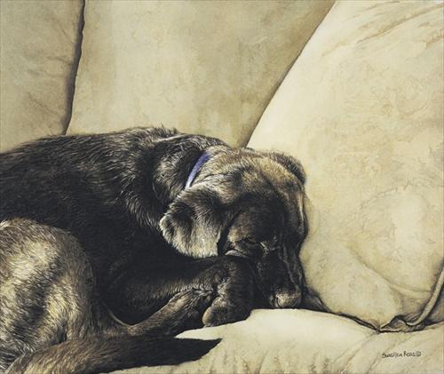 Dog Nap Sueellen Ross