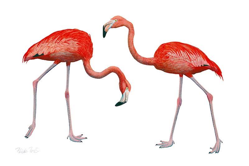 Dos Flamingos - Flick Ford