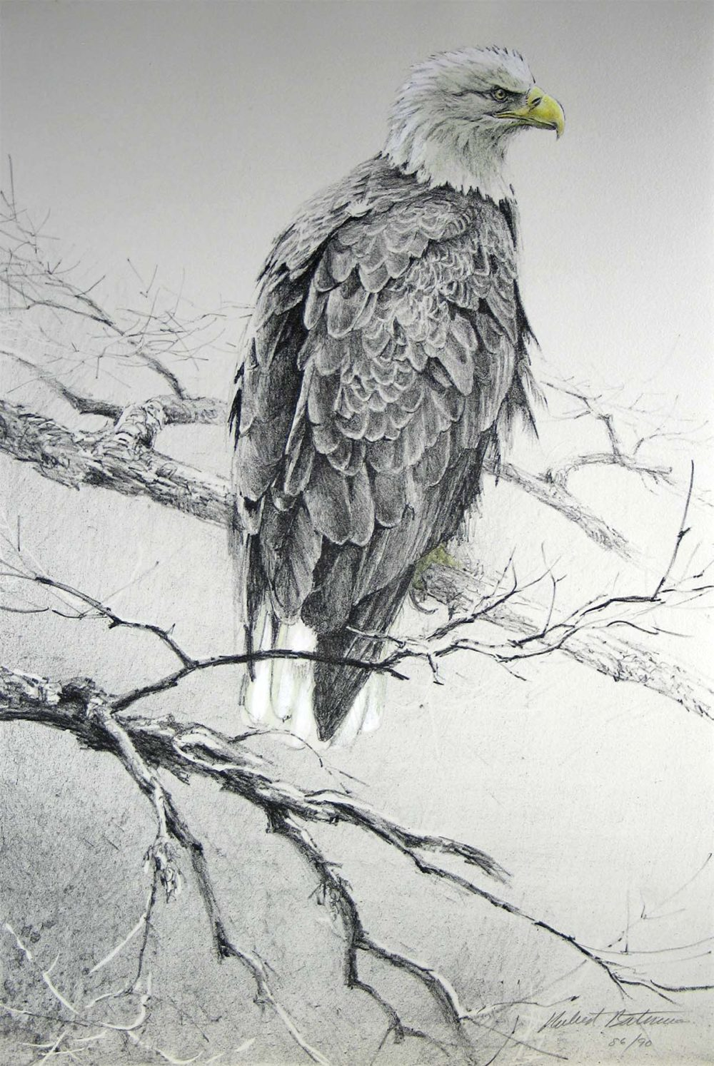 Eagle II - Etching - Robert Bateman