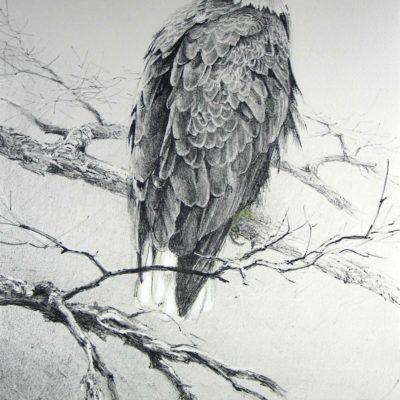 Eagle II - Etching - Robert Bateman