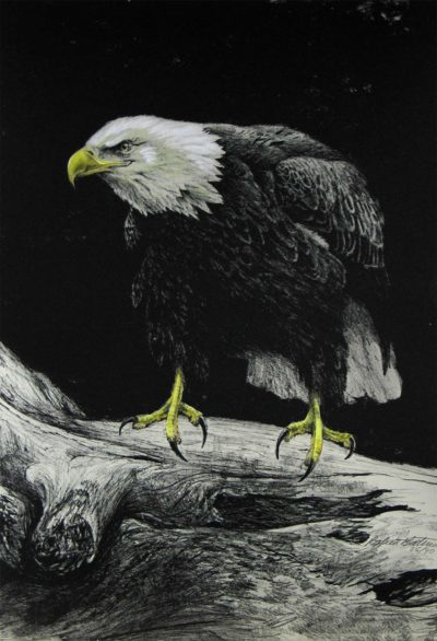 Eagle III - Etching - Robert Bateman