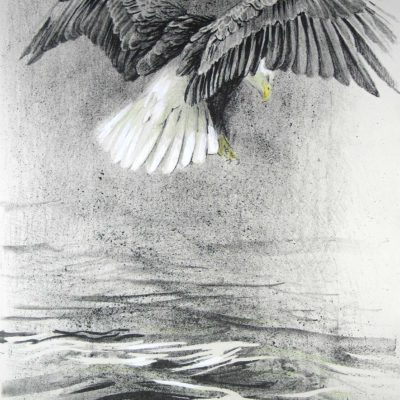 Eagle IV - Etching - Robert Bateman